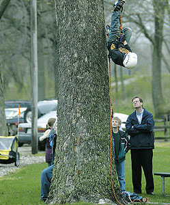עץ גושני פאנל