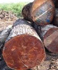 עץ מהגוני לפני עיבוד פאנל מחסן עצים